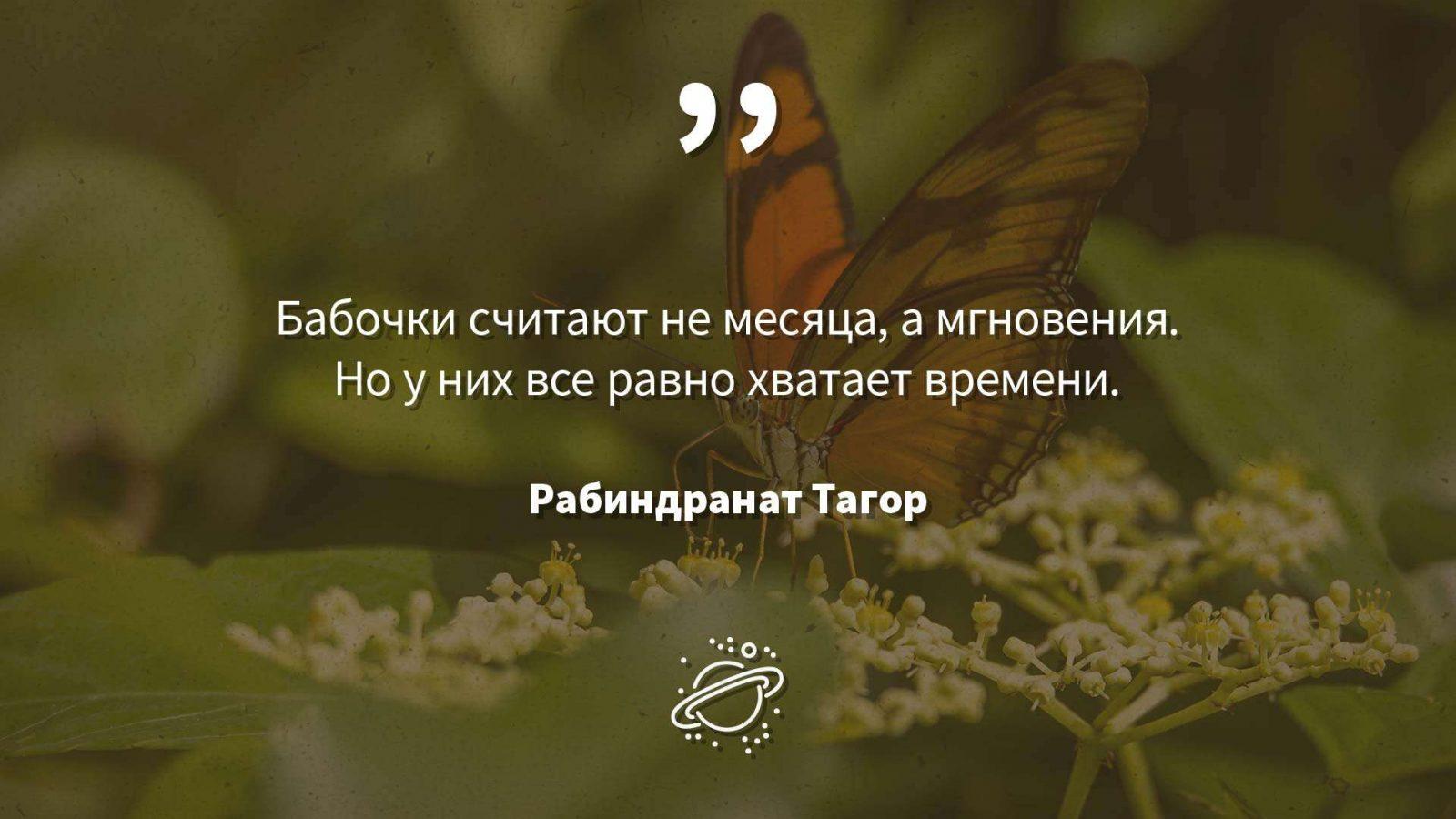 Бабочки считают не месяца, а мгновения. Но у них все равно хватает времени.